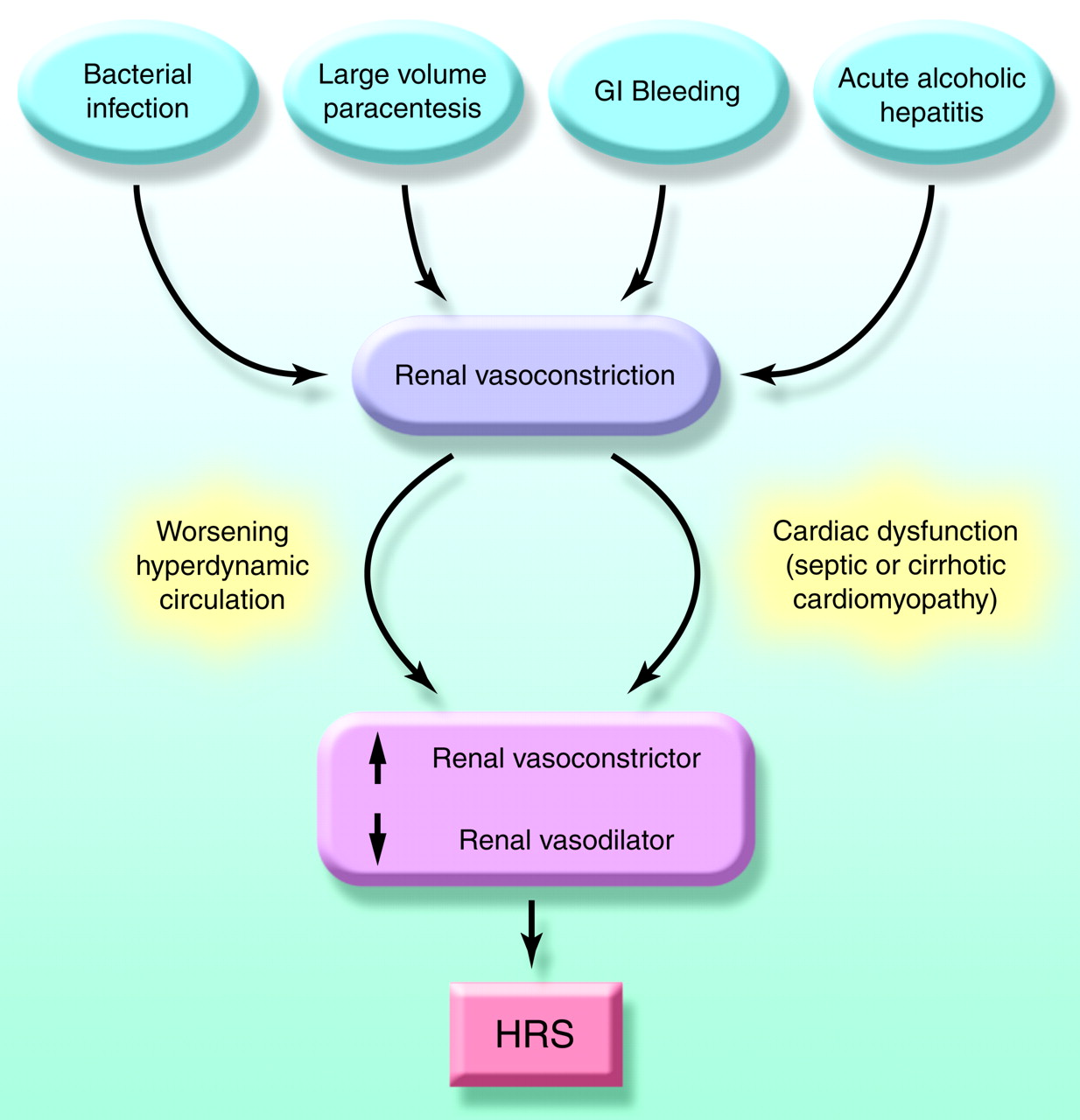 hepatorenal syndrome: pathophysiology and management, Skeleton