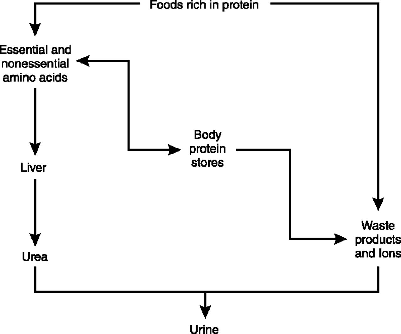 waste product of protein metabolism