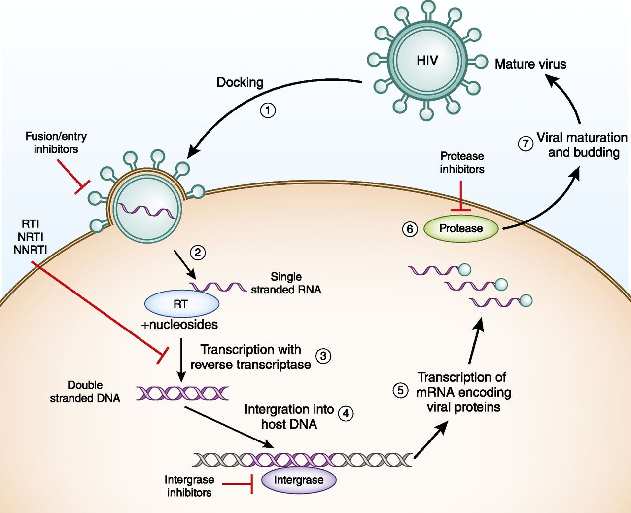 Clinical Pharmacology in HIV Therapy | American Society of