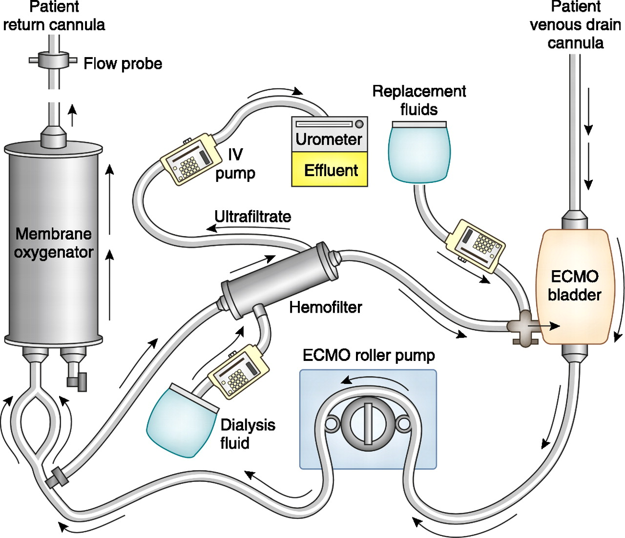Renal Replacement Therapy In Critically Ill Patients Receiving Electrical Wiring Practice Vol 1 And 2 Free Download Diagrams Figure Open New Tab Powerpoint
