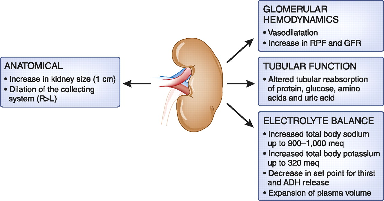 Obstetric Nephrology: Renal Hemodynamic and Metabolic