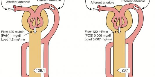 Why Is the GFR So High? Implications for the Treatment of Kidney Failure